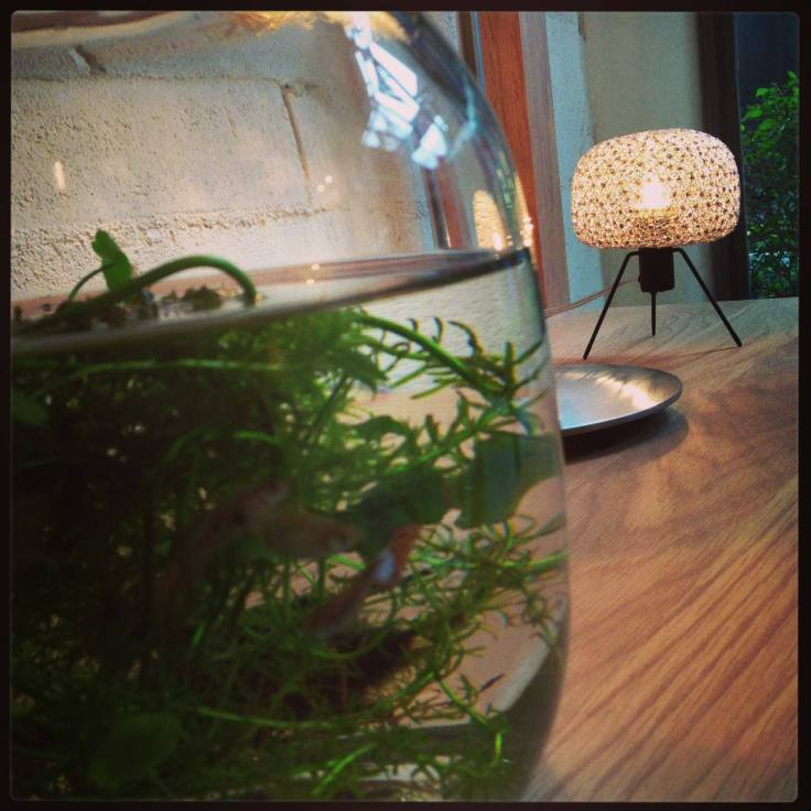 What the fish can see the light from Electro Soul,  a table  lighting from Ango.