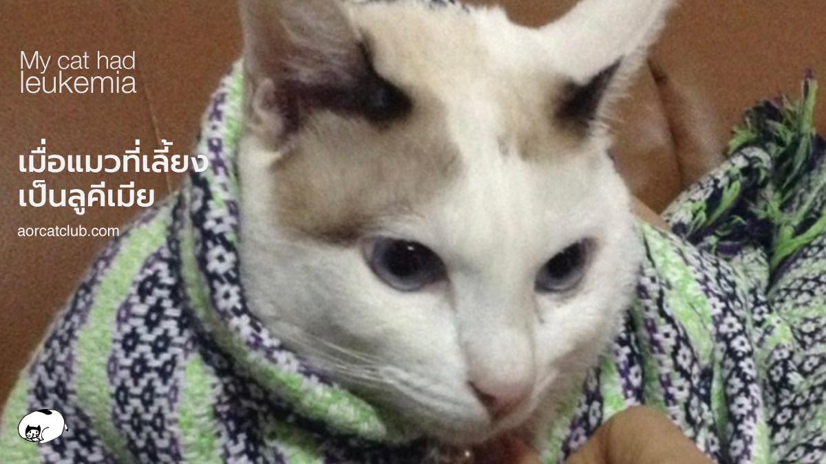แมวเป็นลูคีเมียดูยังไง
