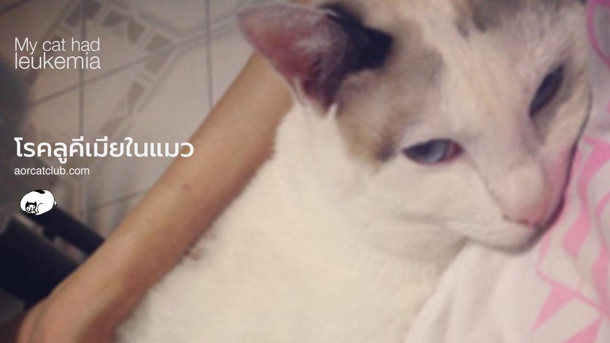 โรคลูคีเมียแมว