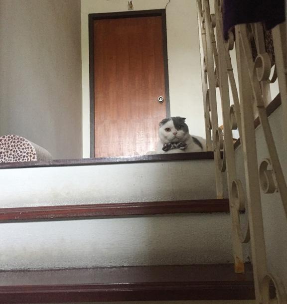 แมวชอบนั่งดักที่บันได