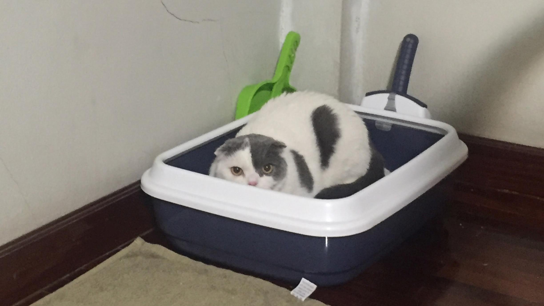 วันแรกที่แมวย้ายบ้าน