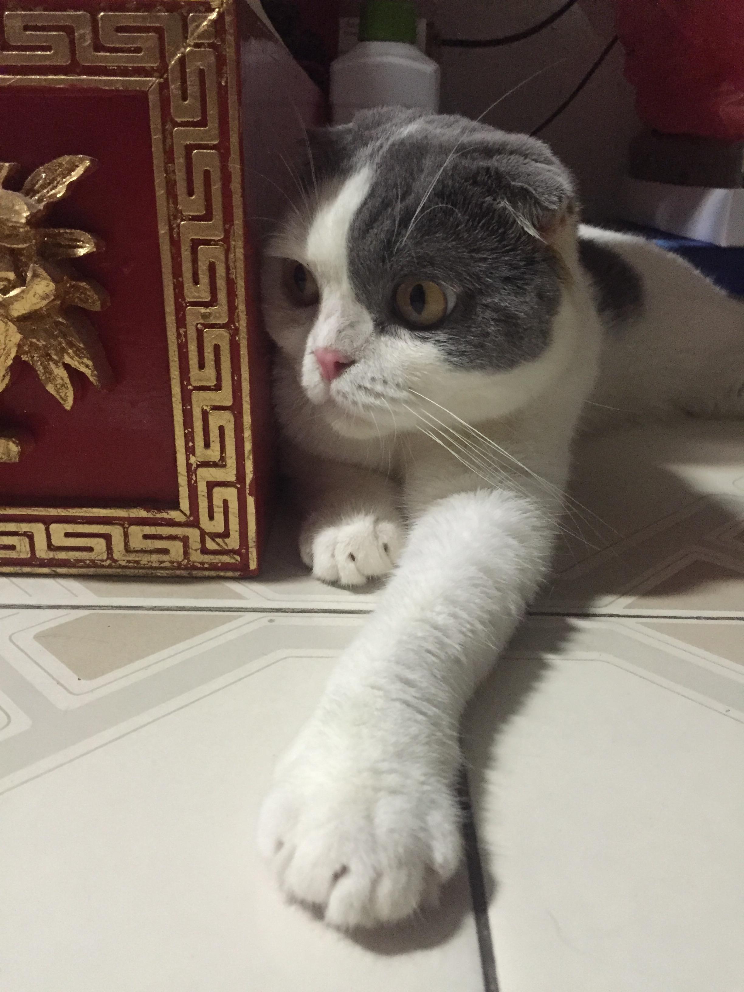 แมวปรับตัวในบ้านใหม่