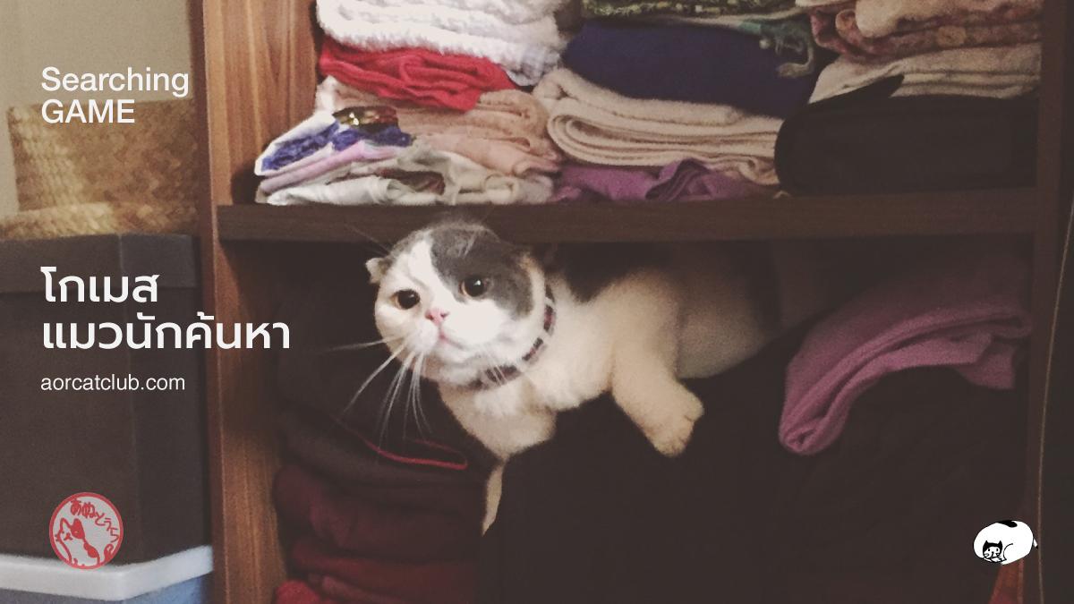 แมวชอบเล่นซ่อนแอบ