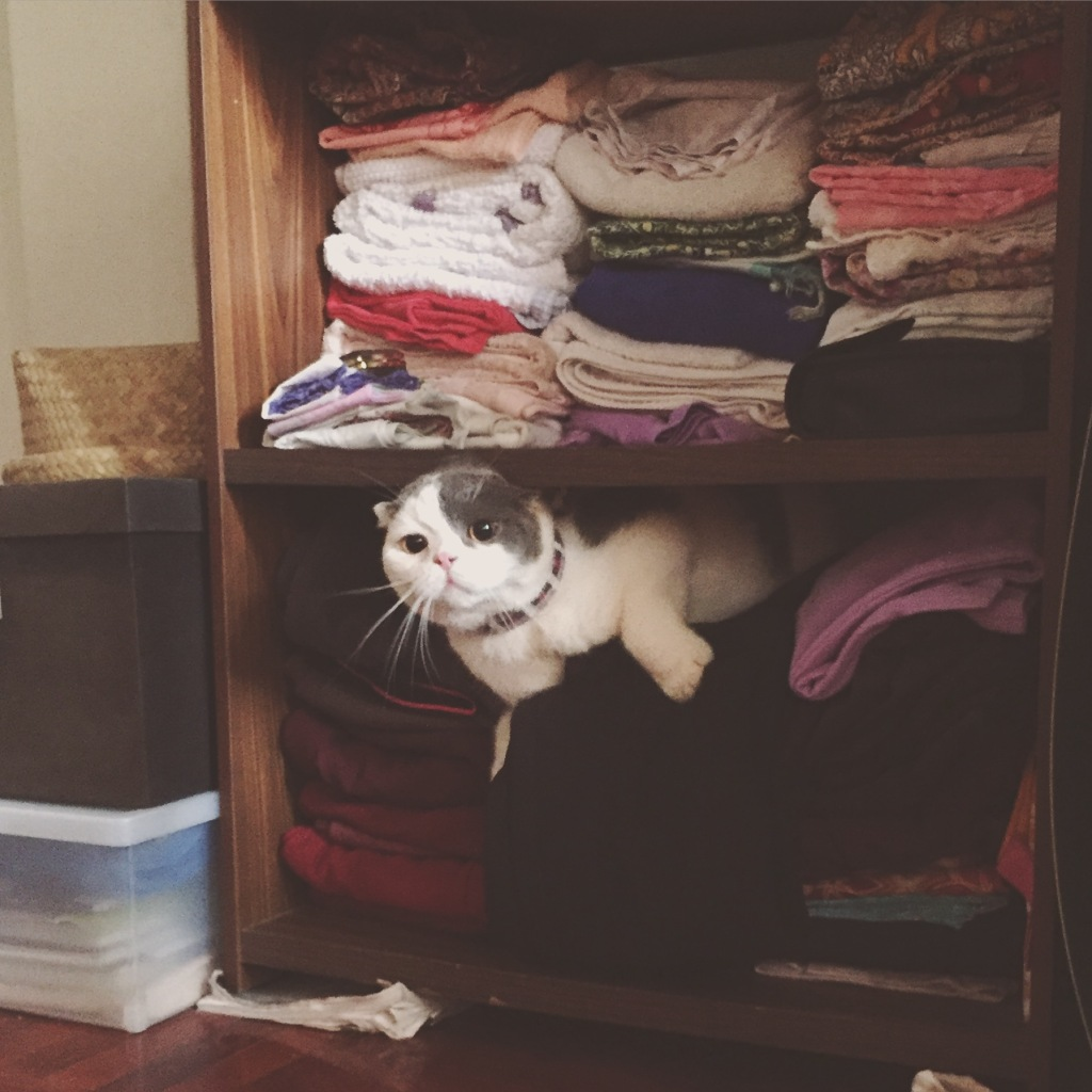 แมวชอบมุดตู้เสื้อผ้า
