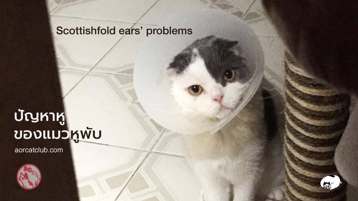 แมวคันหูเกิดจากอะไร