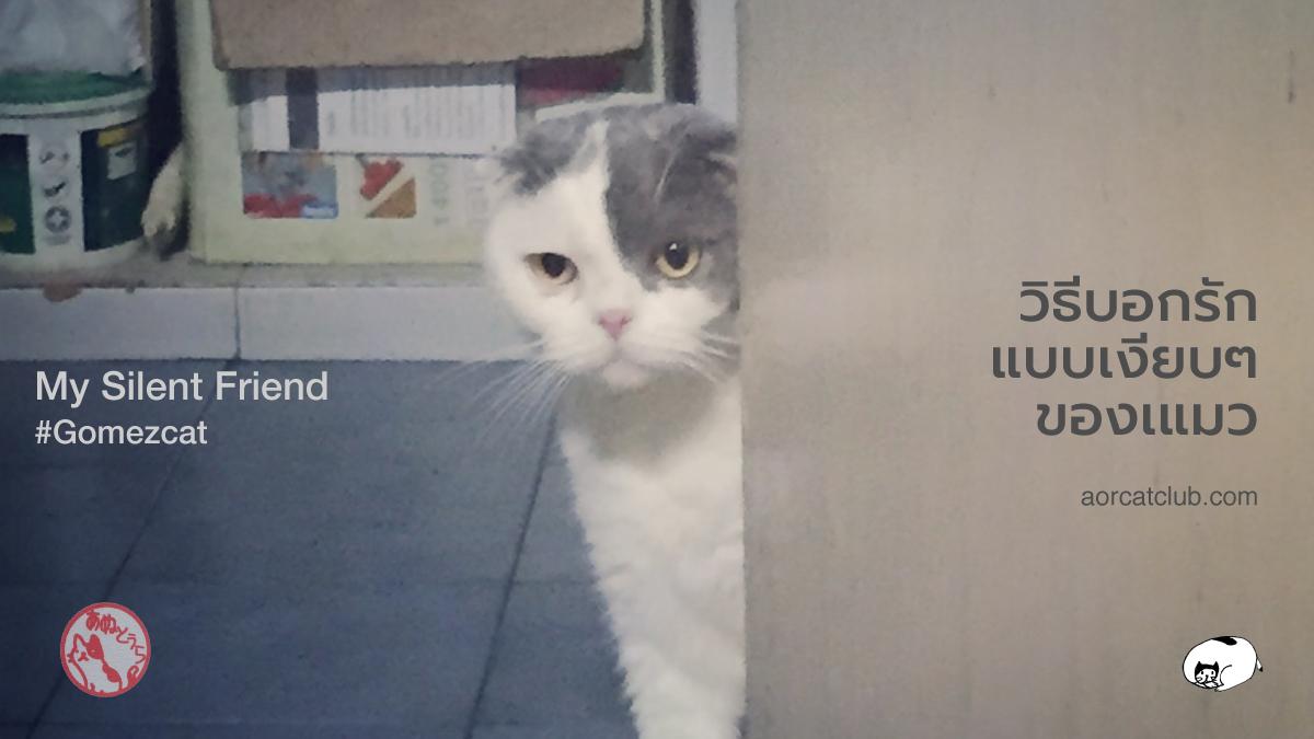 วิธีที่แมวบอกรัก