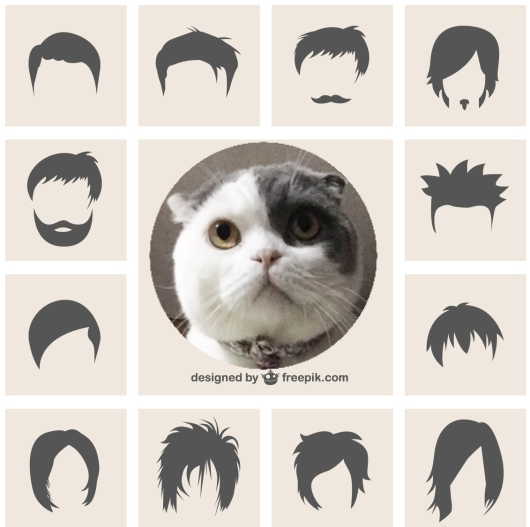 Bob-cat's-hairstyle