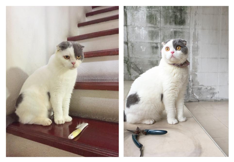 แมว 3 ขวบ ย้ายบ้านใหม่ก็ยังน่ารักได้
