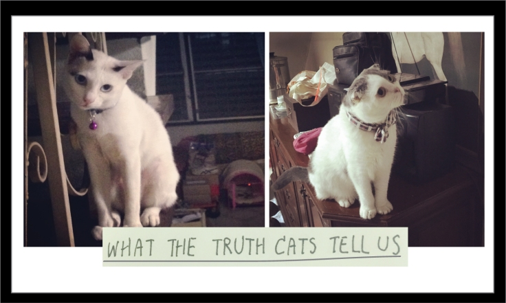 What-cats-tell-us