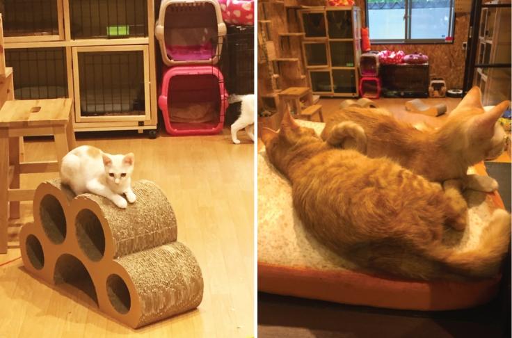 Cat-shelter