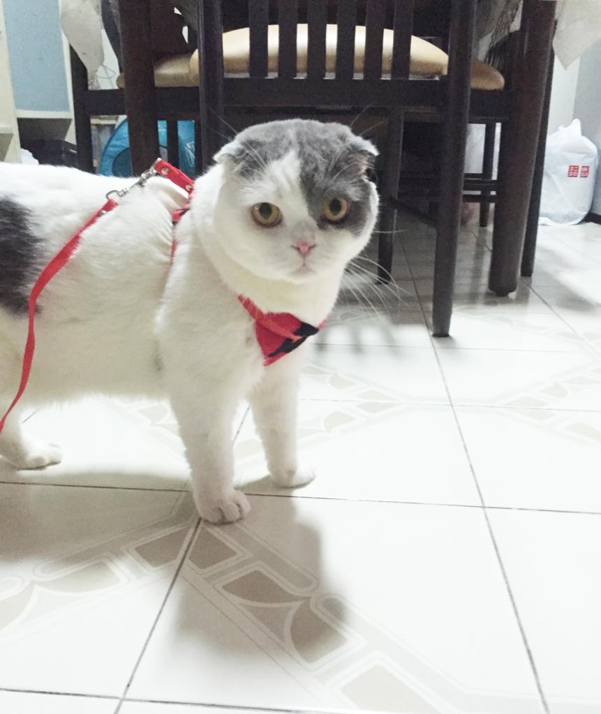 สายจูงแมว ไว้พาแมวเดินเล่น