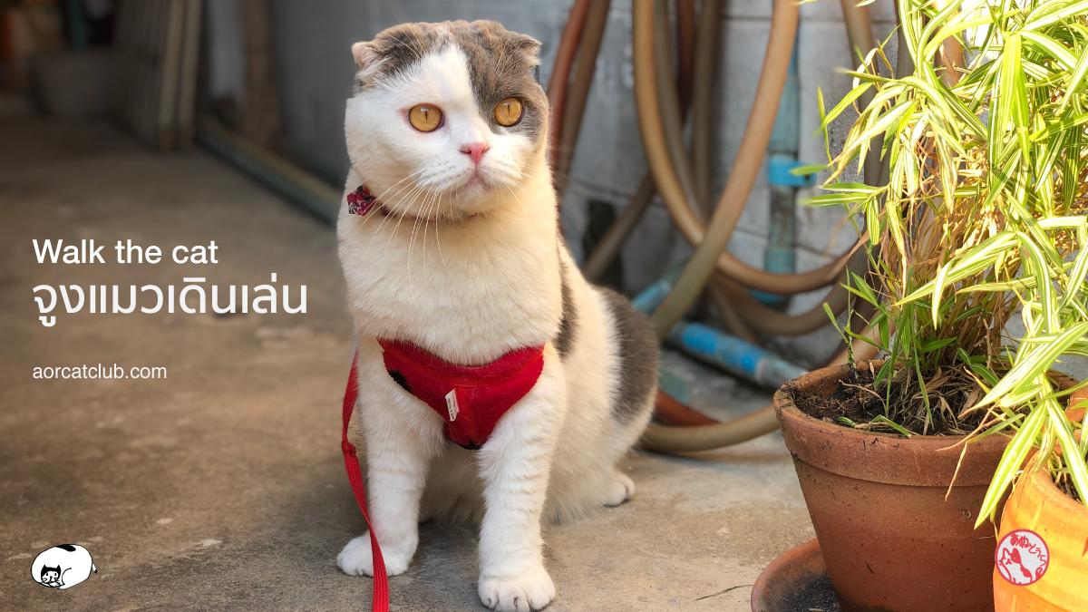 แมวยอมใส่สายจูงแมว