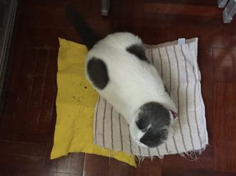 กันแมวเป็นหวัด