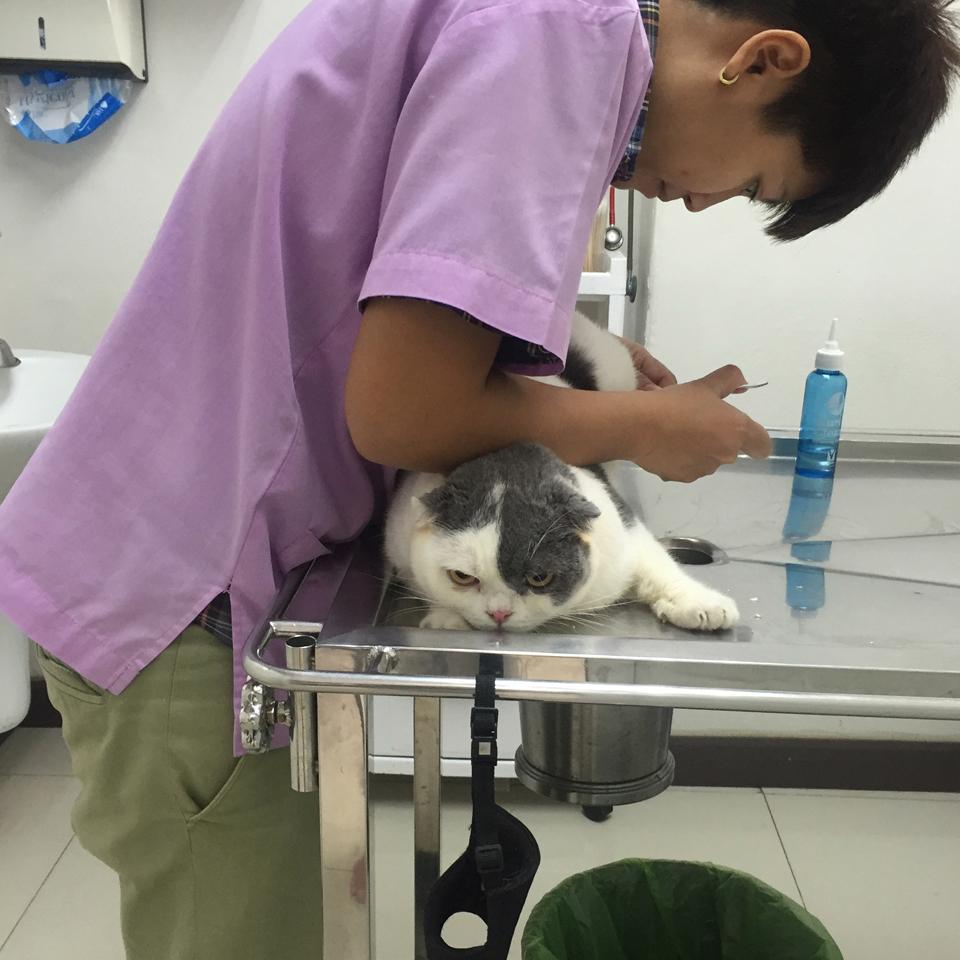 ตัดเล็บให้แมว