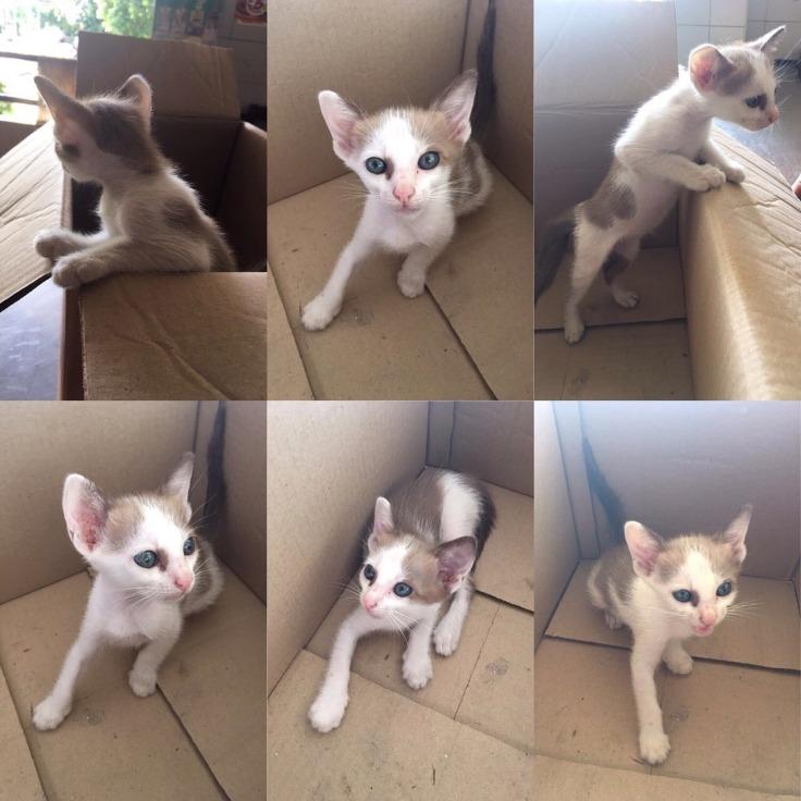 แมวเก็บมาเลี้ยงโคตรน่ารัก #Catclubguest