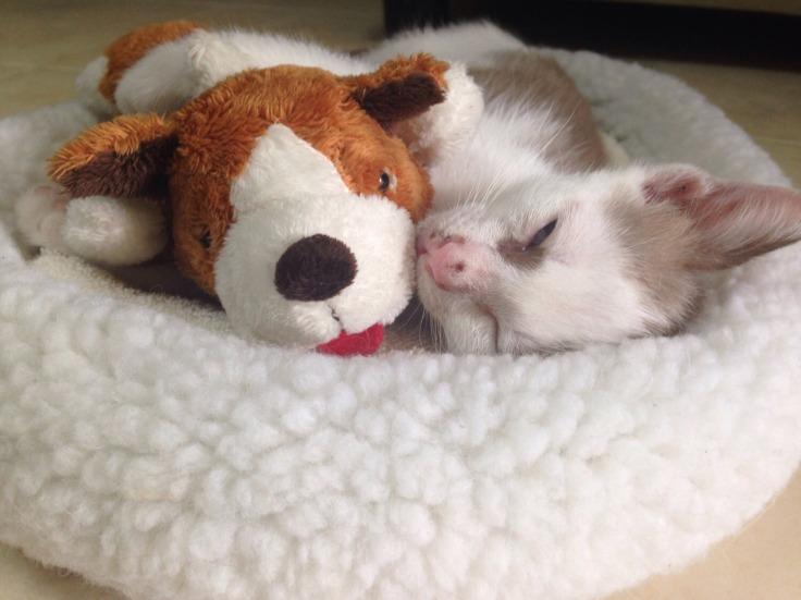 แมวจรรับมาเลี้ยงโครตน่ารัก #Catclubguest