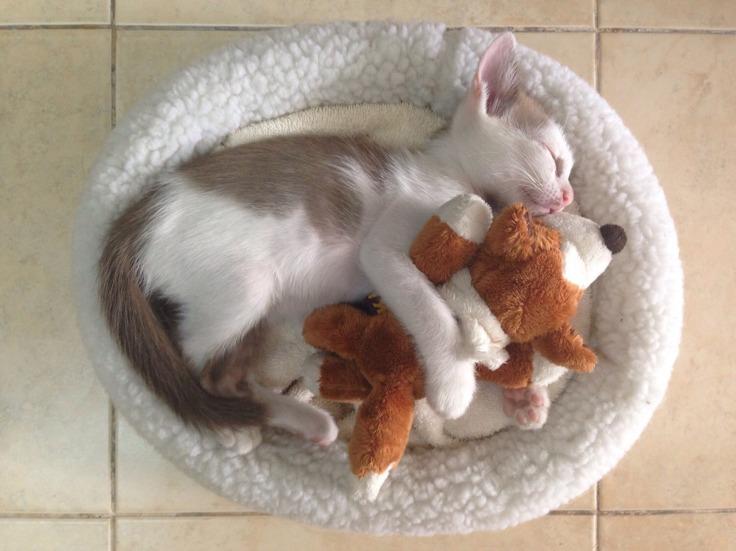 แมวจรรับมาเลี้ยงโคตรน่ารัก #Catclubguest