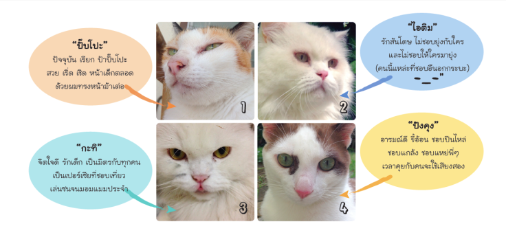 แมวจรรับมาเลี้ยงโคราน่ารัก #Catclubguest