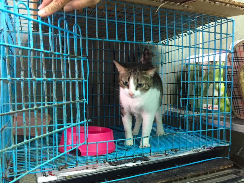 แมวเป็นลูคีเมียยังอยู่ได้ #Catclubguest