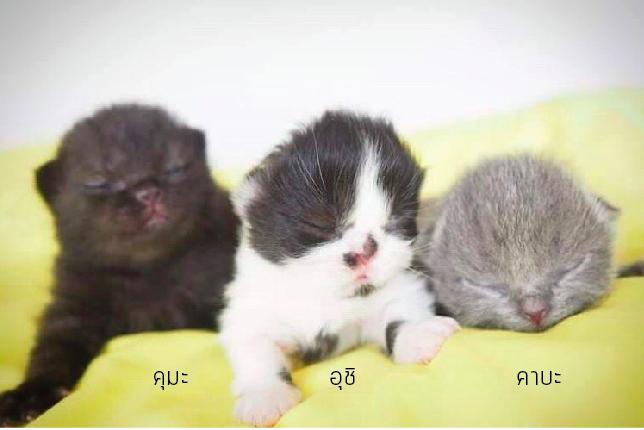 ให้ความสุขสู้กับโรค FIP แมว #Catclubguest