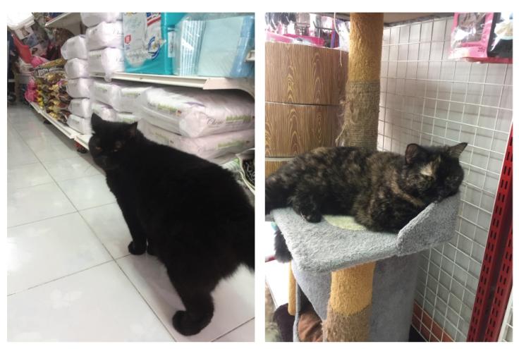 แมวกับหมาอยู่ด้วยกันได้ #Catclubguest
