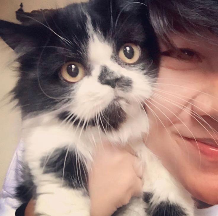 สู้กับโรค FIP แมว แมวต้องไม่เครียด #Catclubguest