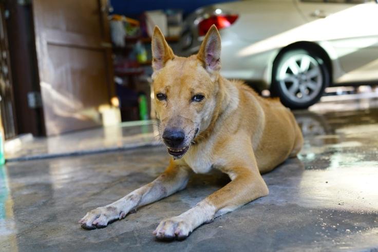 พิษสุนัขกับบาดทะยัก คล้ายกัน เรื่องจาก #Catclubguest