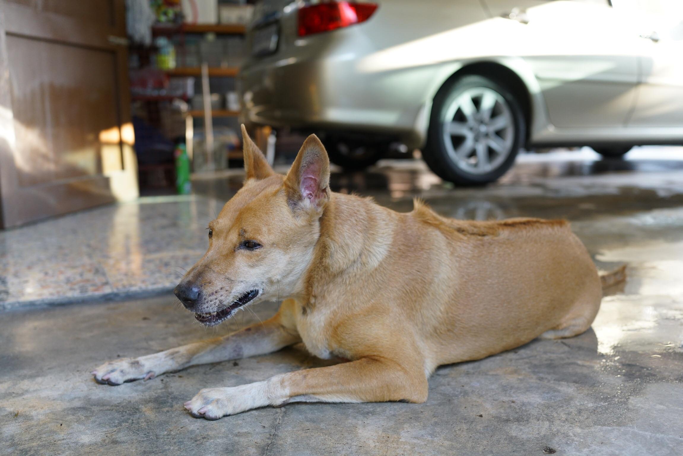 พิษสุนัขหรือบาดทะยัก อาการคล้ายกัน เรื่องจาก #Catclubguest