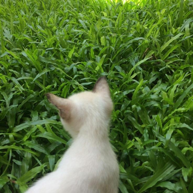 แมวเดินเซจากสารพิษ #Catclubguest