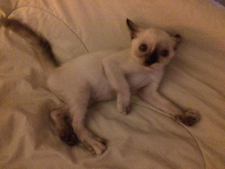 แมวดินเซ #Catclubguest