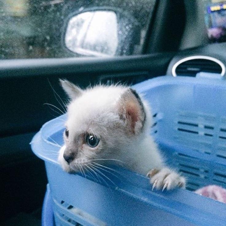 แมวเดินเซ #Catclubguest