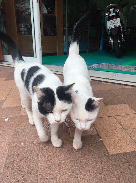 แมวเลือกบ้านเอง เรื่องจาก #Catclubguest