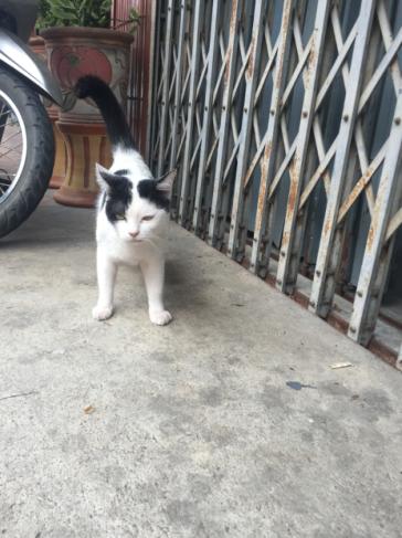 Catclubguest_Panda3