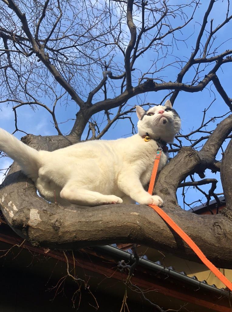แมวปีนต้นไม้เก่ง แต่ลงไม่เก่ง