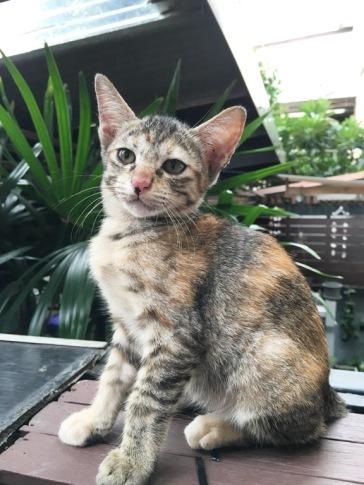Catclubguest8