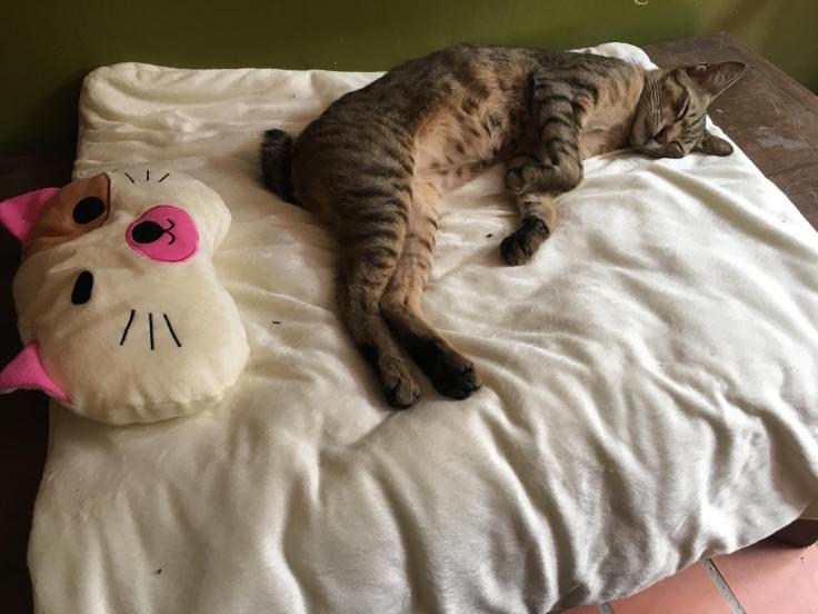 แมวของคุณตราชู