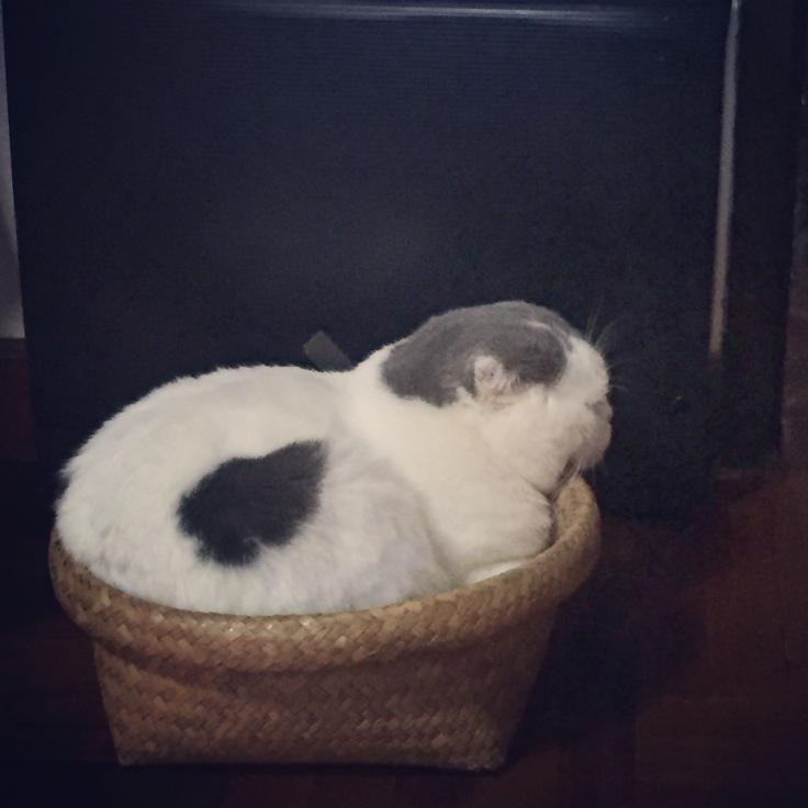 Gomezcat2_overweight