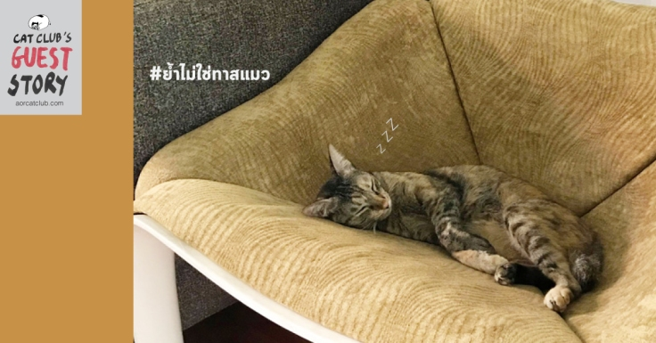 มือใหม่หัดรักแมว ใน #Catclubguest