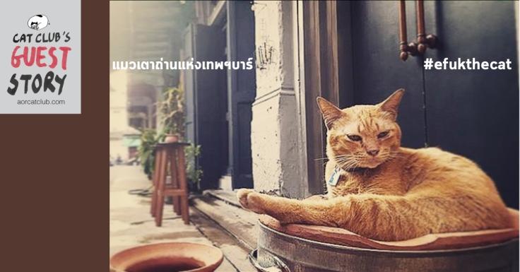 แมวเทพร้านเทพฯบาร์