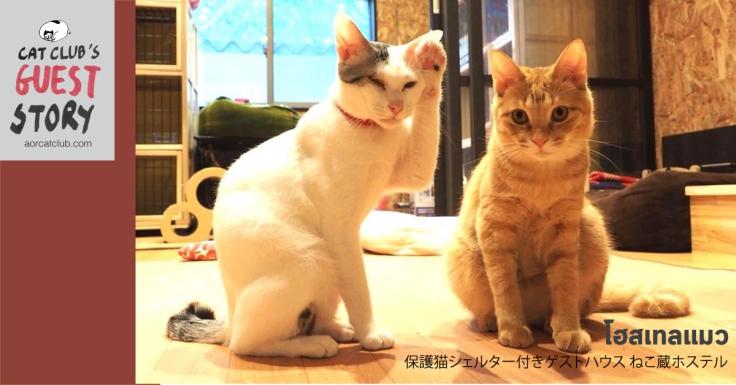 โฮสเทลแมว