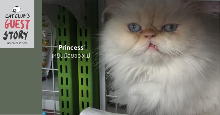 แมวเปอร์เซียน่ารัก