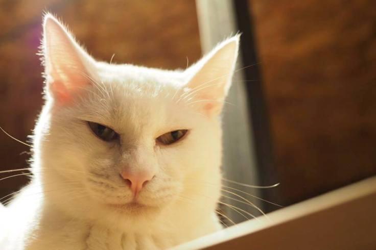 โฮสเทลแมวในฟูกูโอกะ