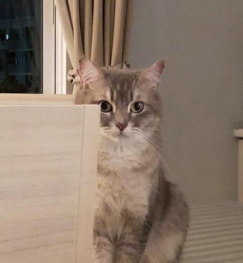 แมวพี่น้องร่วมสาบาน #catclubguest