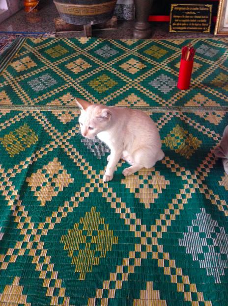 Temple cat 1