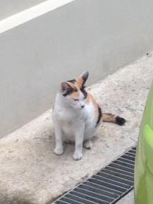 แมววัด4_aorcatclub