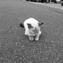 Whatcatsthink3_aorcatclub