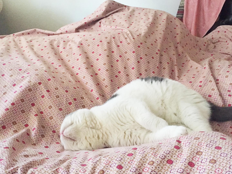 Gomezcat Rules of cat_Catclub