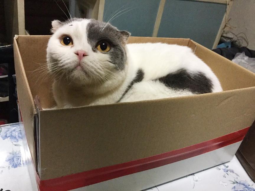 ทำไมแมวชอบนอนกล่อง