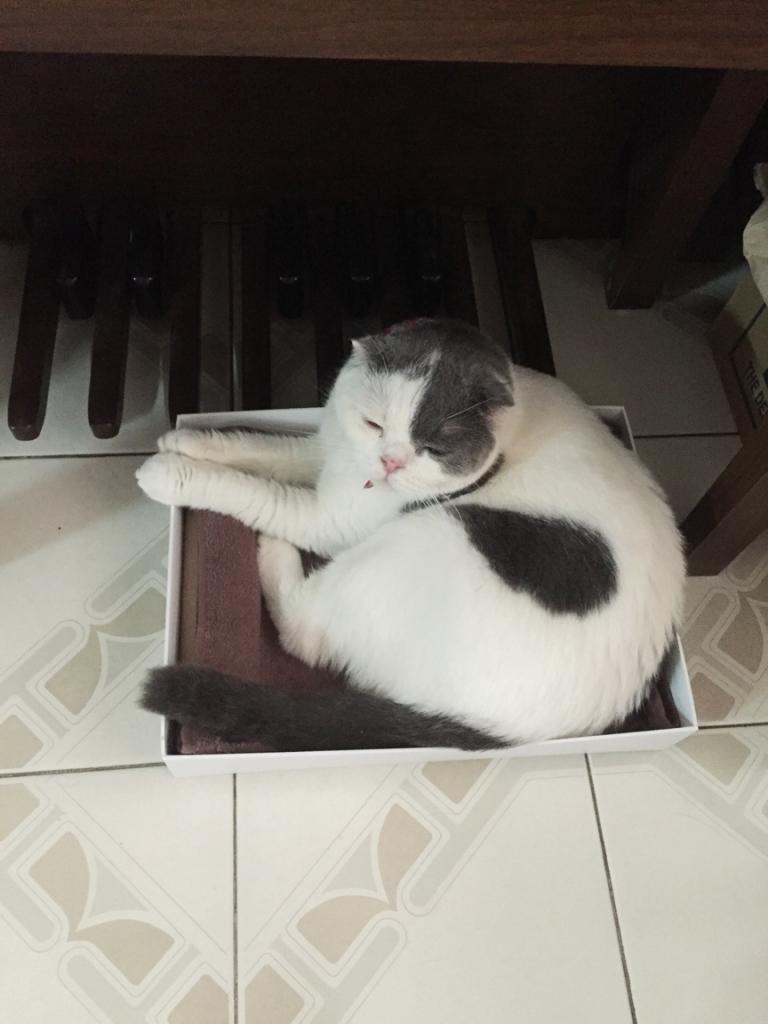 แมวชอบนอนกล่องกระดาษ