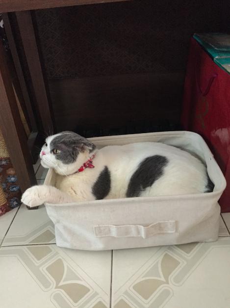 แมวกล่องมูจิ